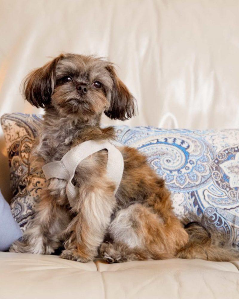 Watson-Susans-dog--800x957